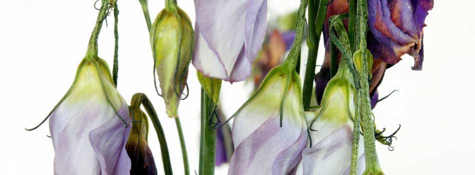 banner_flowers